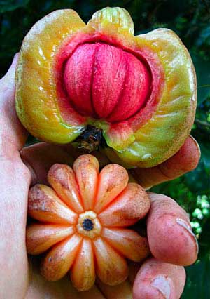 Pure garcinia cambogia is the best garcinia cambogia