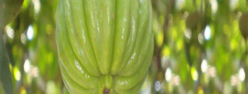garcinia cambogia warnings you should know