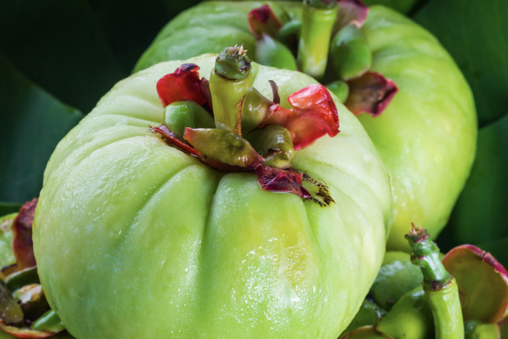 Top choices of garcinia cambogia make weight loss easy